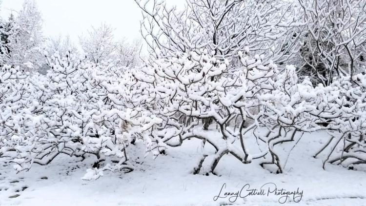 winter photo 2-1518586019040
