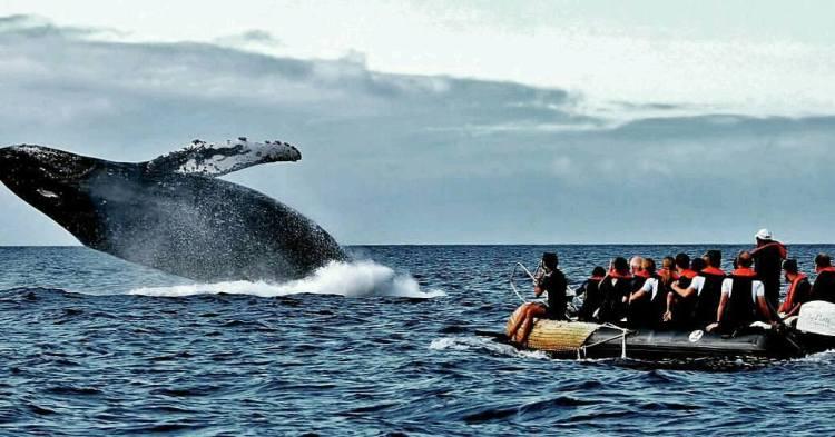 Galapagos 9
