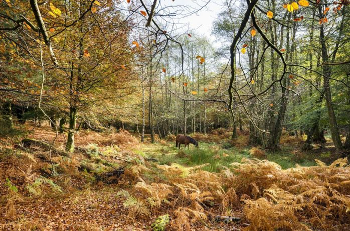 Autumn-in-the-New-Forest-at-Bolderwood
