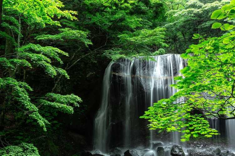 japan park 2