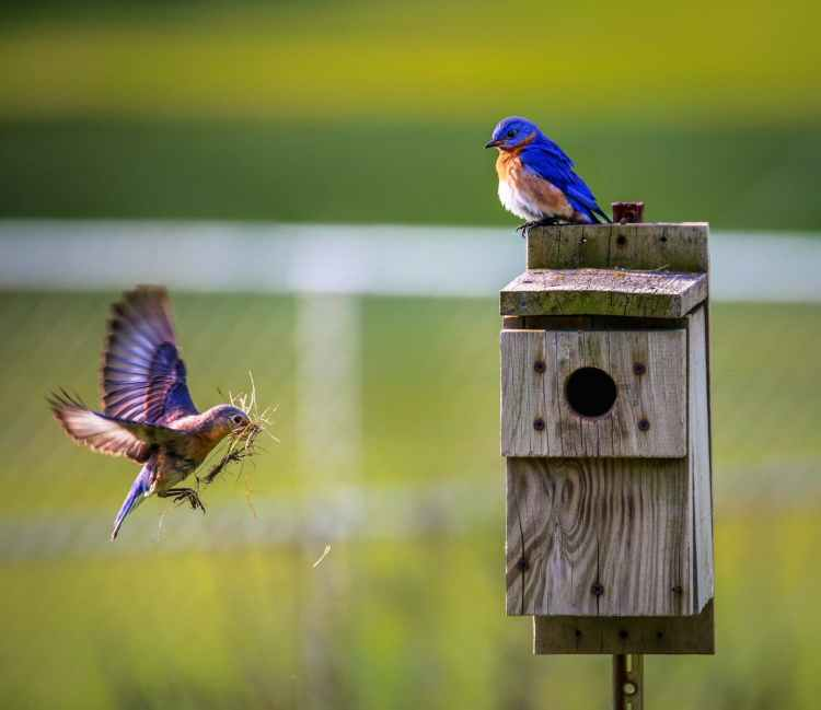 animals avian beaks birdhouse