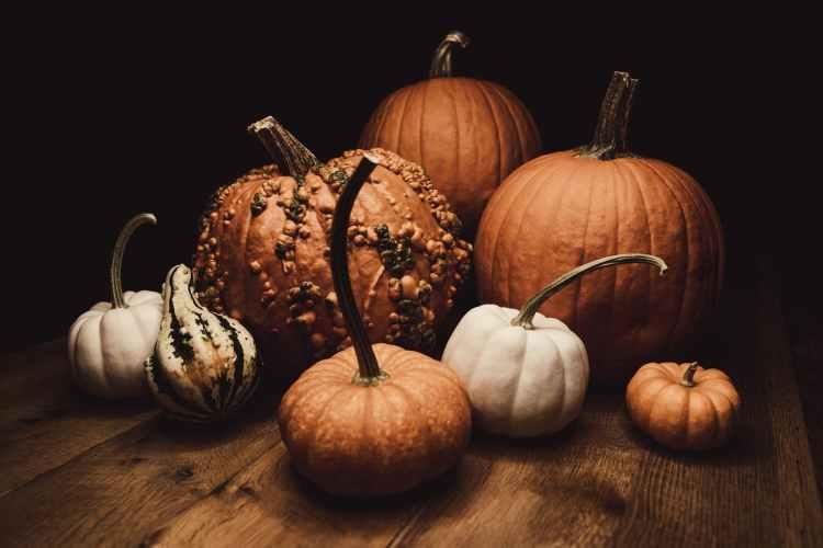 variety of pumpkins