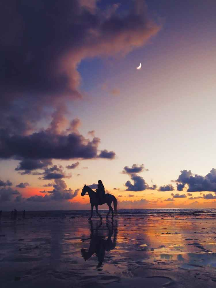 silhouette photo of person riding on horse
