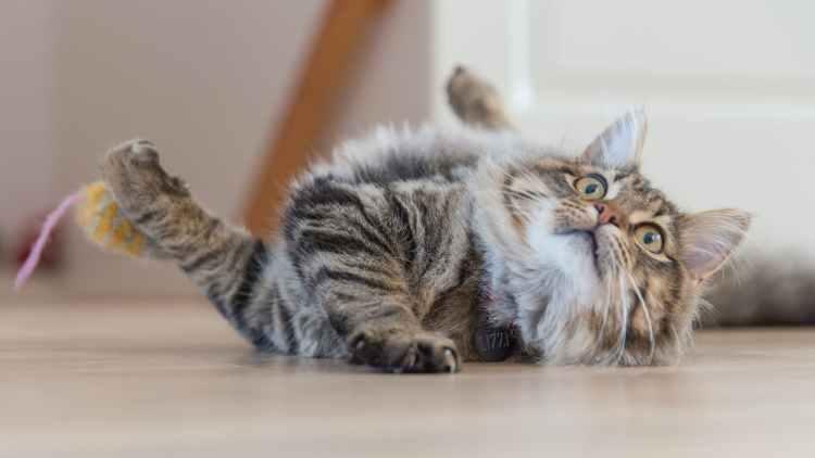 gray cat on floor