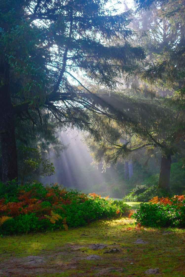 sunlight beaming on green trees