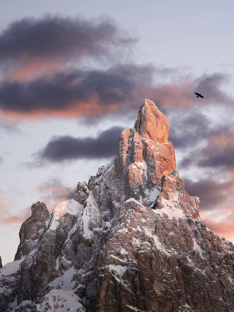 bird flying over rocky mountain