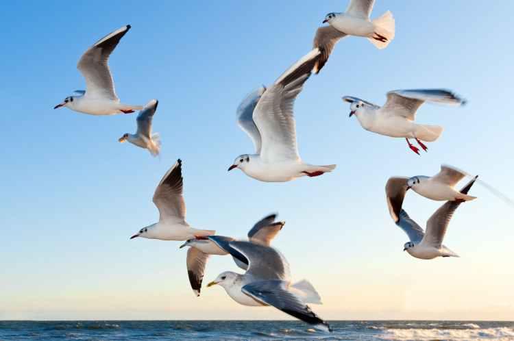 white seagulls near water