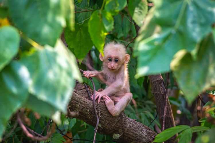 brown monkey on brown tree branch