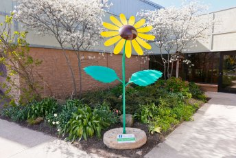 This 8 ft, 3 in Common Sunflower greets families outside of LifeCenter Plus in Hudson.