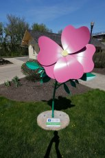 This stunning Swamp Rose sculpture is located at the Cuyahoga Valley Scenic Railroad, 27 Ridge St. in Akron.