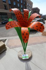 This stunning Tiger Lily sculpture stands tall on E. Erie Street in downtown Kent.