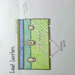 How To Do A Stem And Leaf Diagram Tpi Wiring 12knights Is Dp Biology Wiki 911 Draw Label Plan