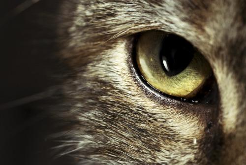 borgomani:Cat© Christopher Scott