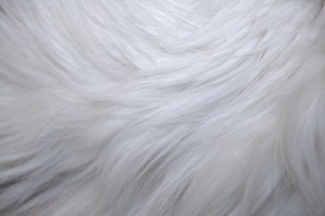 white-fur-texture