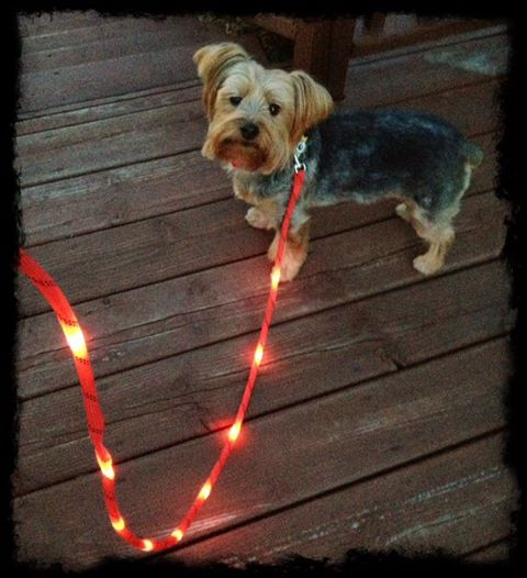 Litey Leash  The Super Cool LED Light Up Dog Leash  13