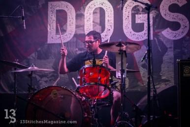 streetdogs-observatory-2018-1