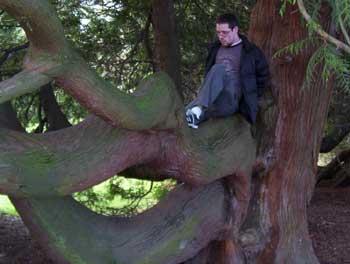 treeboySean