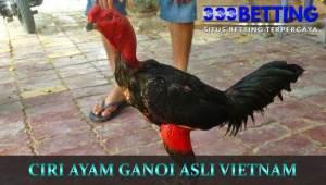 ciri-ayam-ganoi-asli-vietnam