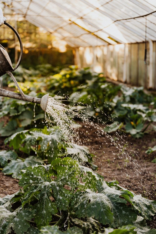 7 Tips for Building Better Commercial Gardens
