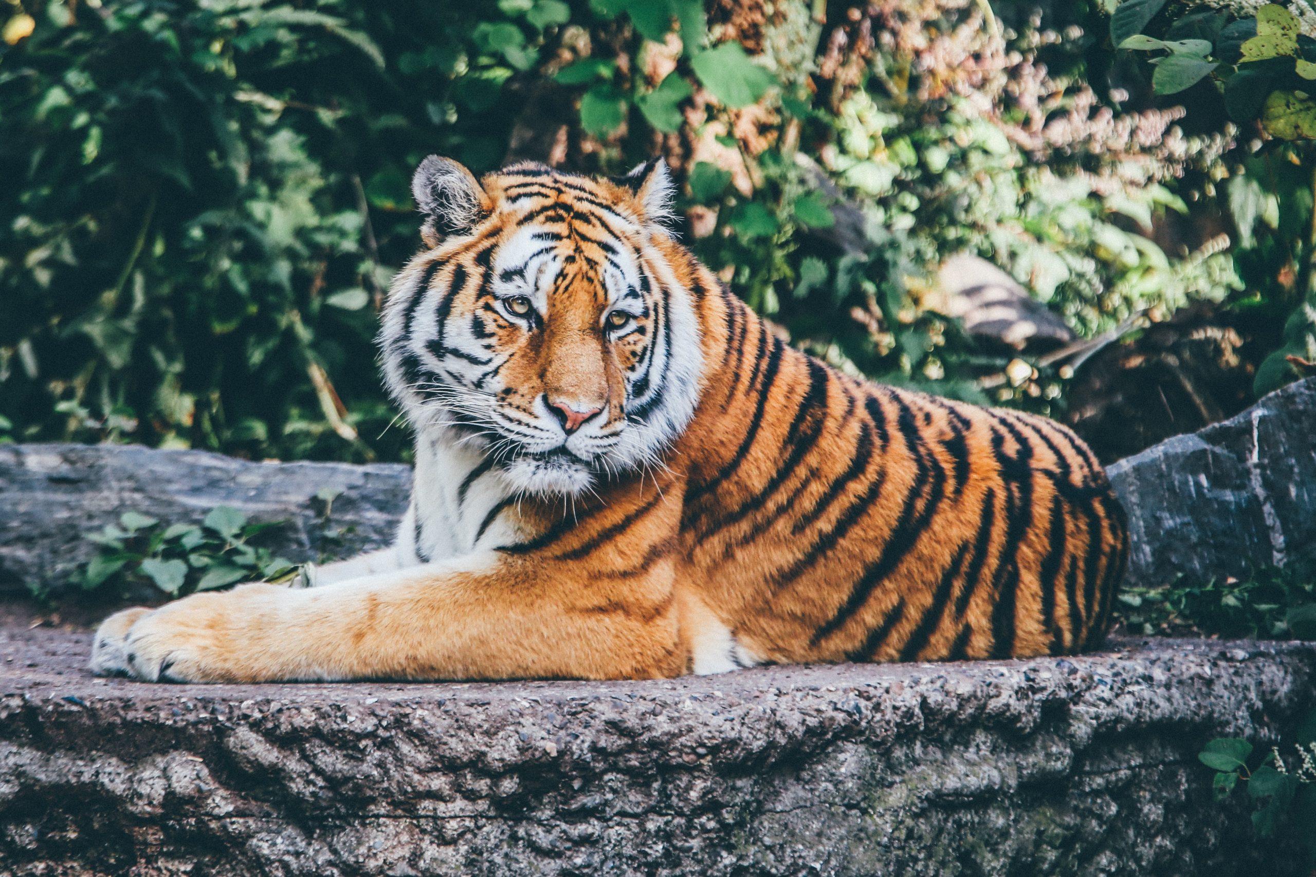 Paris Bans Wild Animals in Circuses!