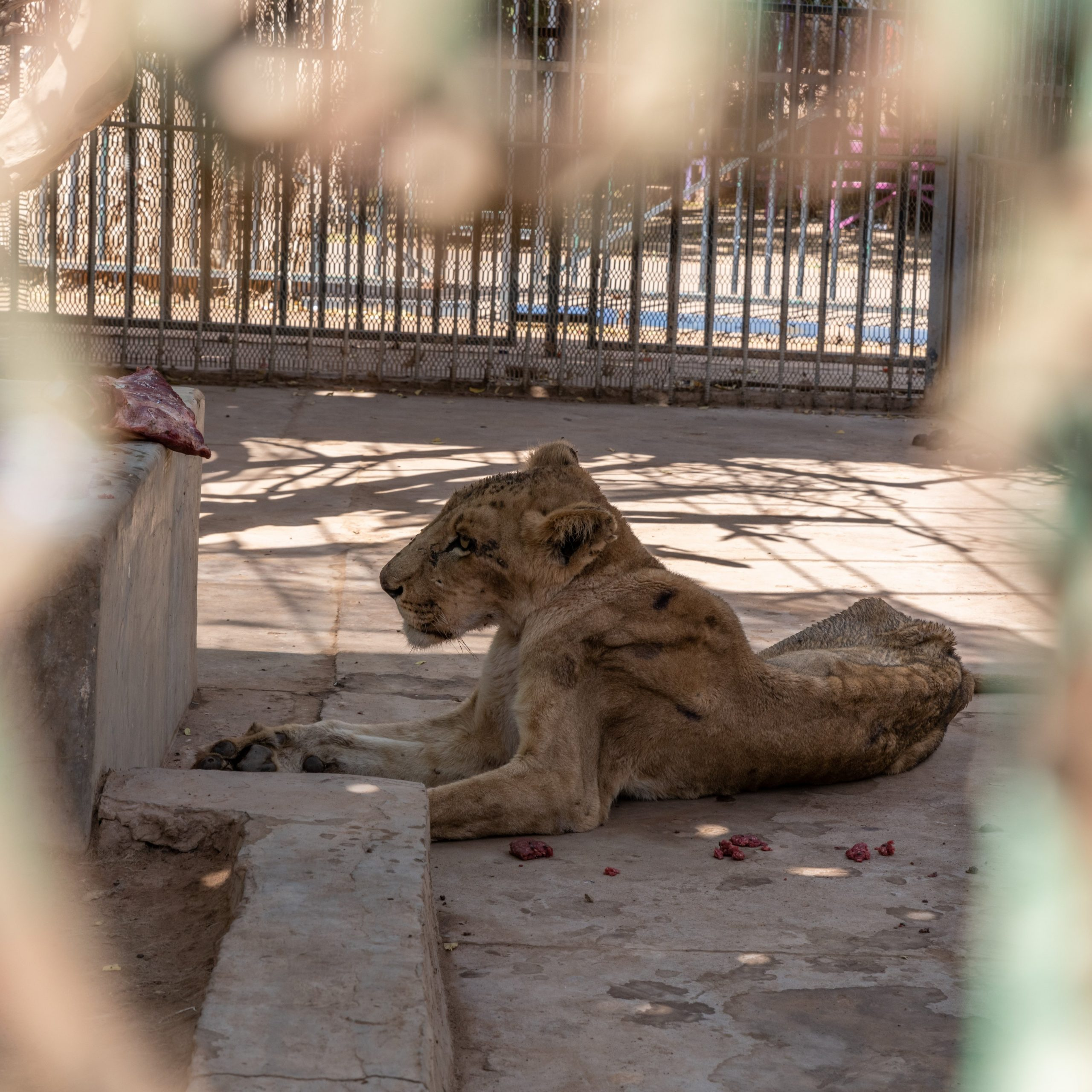 Petition: Send Zoo Animals in Deplorable Conditions to Animal Sanctuaries
