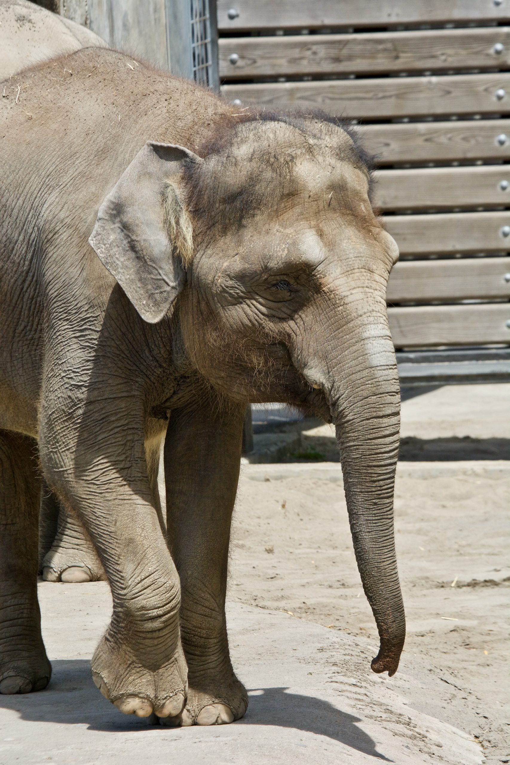 Petition: Zoos and Aquariums Must Help Stop Zoonotic Diseases that Kill Millions of People Annually!