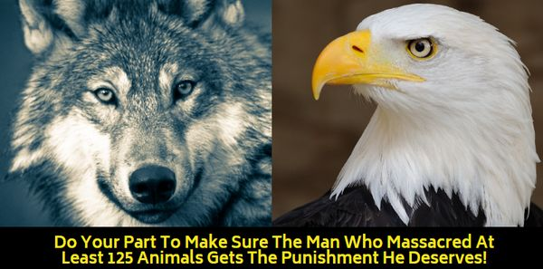 Petition: Protect Animals from Convicted Wildlife Murderers