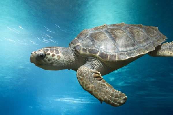These Fishermen are Now Protecting the World's Most Endangered Sea Turtles  Instead of Selling Them! - One Green Planet