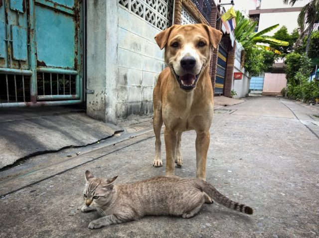 dog and cat on street