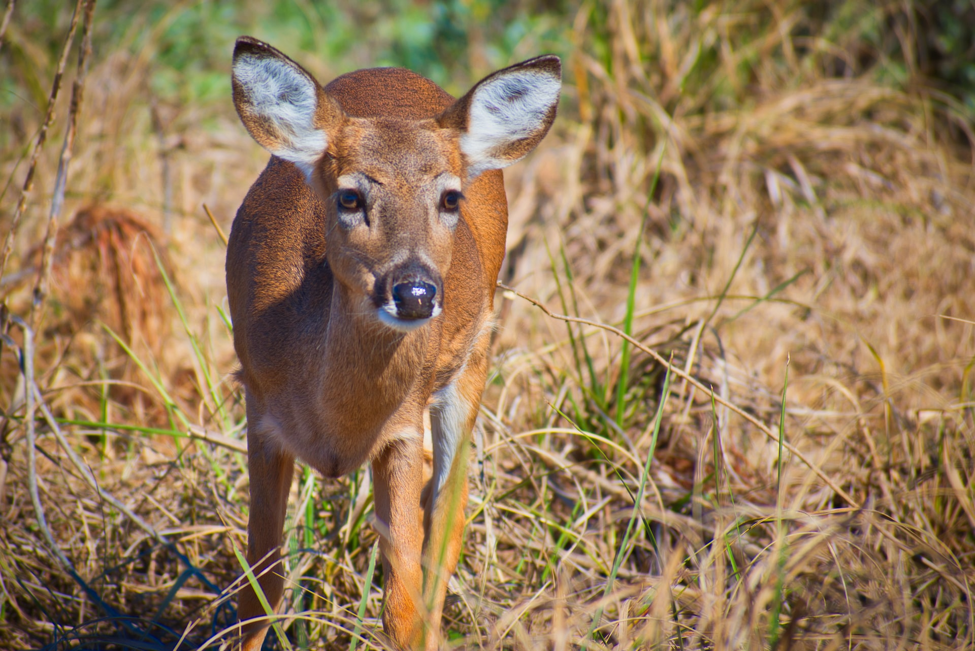 Deer Rescued by Fishermen Half Mile Out at Sea