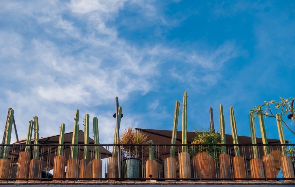 A row of tall skinny cactus plants in terra-cotta pots on a balcony underneath a blue sky.