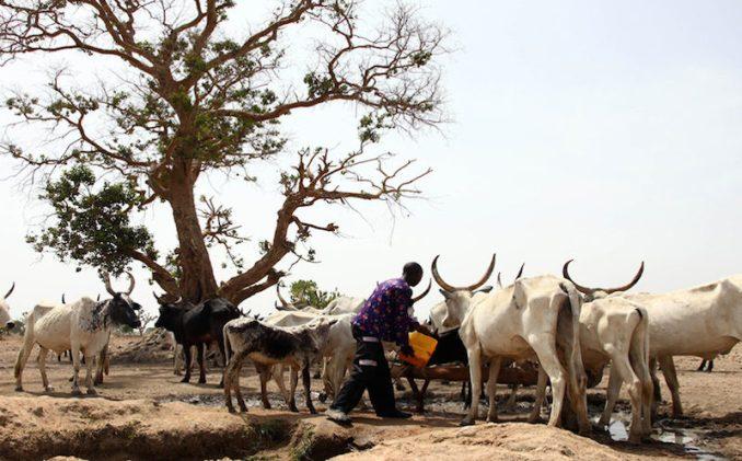 herdsmen attacks