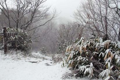 雪の弥彦山1