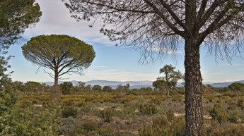 Plaines des Maures