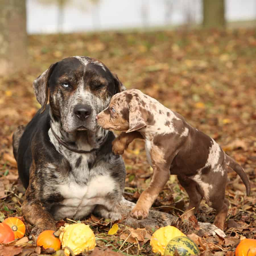 dog and puppy autumn