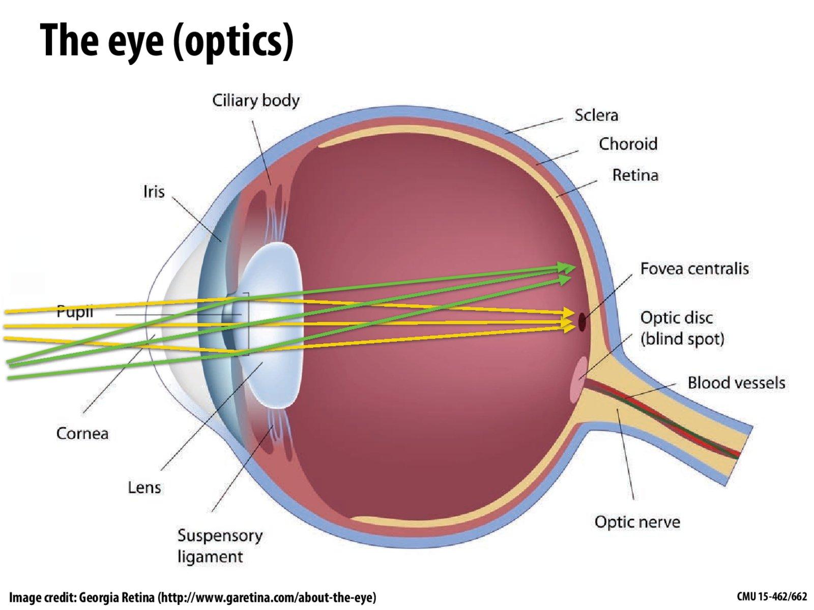 hight resolution of diagram of blood vessel slide