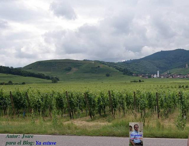 Ya estuve en viñedos de Campos Alsacia