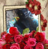 Flowers fur Phoebe Feb. 2015