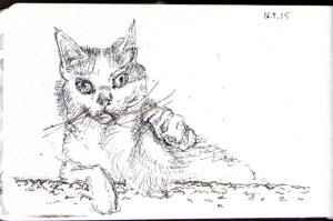 thomas-dalsgaard-clausen-2015-04-16a-sketch-of-a-sleepy-cat-named-phoebe-in-ballpoint-pen