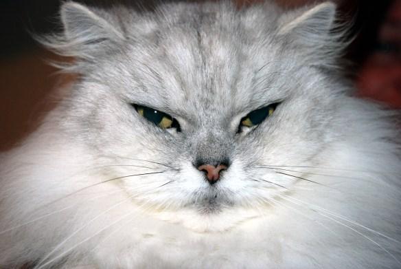 Fat_Cat_(4343893510)