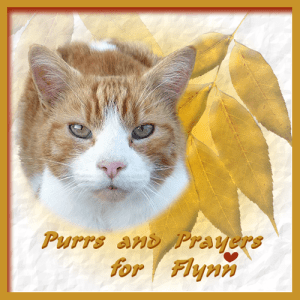 Purrs and Prayers for Flynn