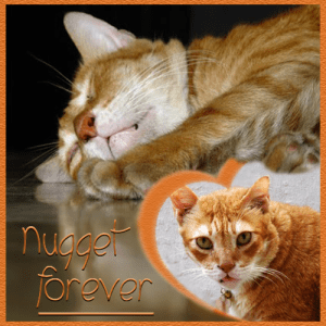 Nugget Forever