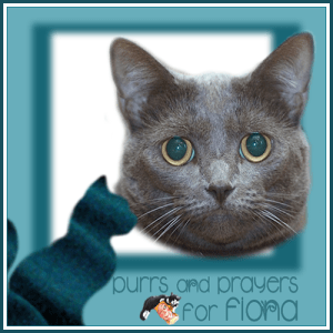 Purrs and Prayers for FIONA