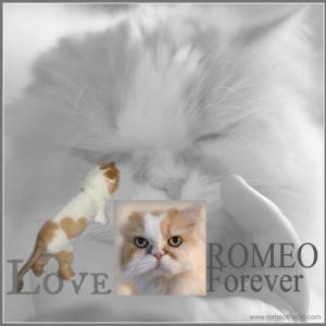 ROMEO Forever