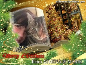 caturdaychristmas2