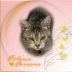 Feline, FOREVER