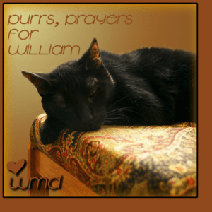 Purrs Prayers for WILLIAM (WMD)