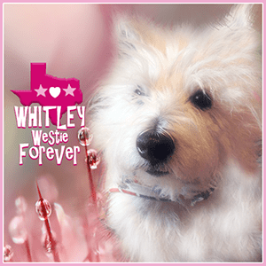 Whitley Westie FOREVER Badge
