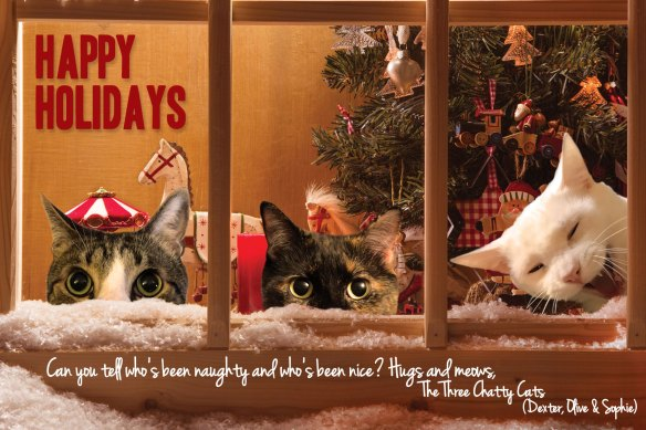 three-chatty-cats_holiday-card2016