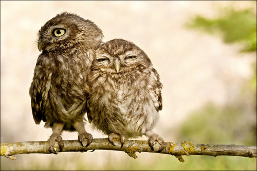 fuckyeahowls:jjjjasmine:birdbeak:(via lashantegoestocamp)